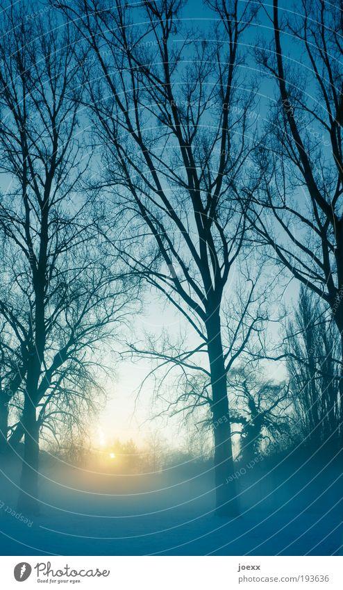 Morgens um 7 ist die Welt noch in Ordnung... Natur Himmel Baum Sonne Winter ruhig kalt Luft Eis groß Frost Schönes Wetter Dunst Sonnenuntergang Morgennebel