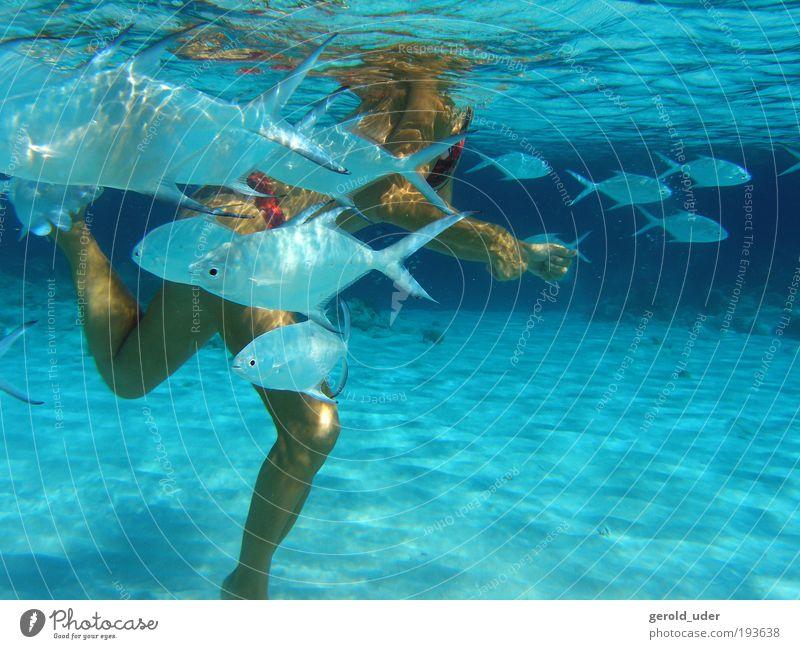 Frau mit tropischen Fischen Mensch Frau Wasser Ferien & Urlaub & Reisen Sommer Meer Tier Erwachsene Erholung feminin Spielen Beine Zufriedenheit Wellen Schwimmen & Baden Fisch