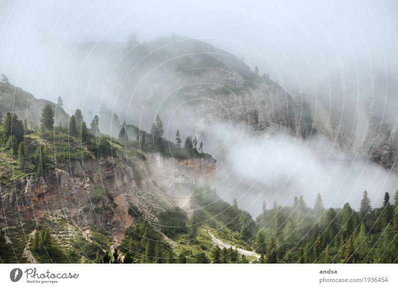 Nebel Ferien & Urlaub & Reisen Abenteuer Ferne Freiheit Berge u. Gebirge wandern Natur Landschaft Wolken Wetter Baum Wiese Wald Hügel Felsen Alpen Dolomiten