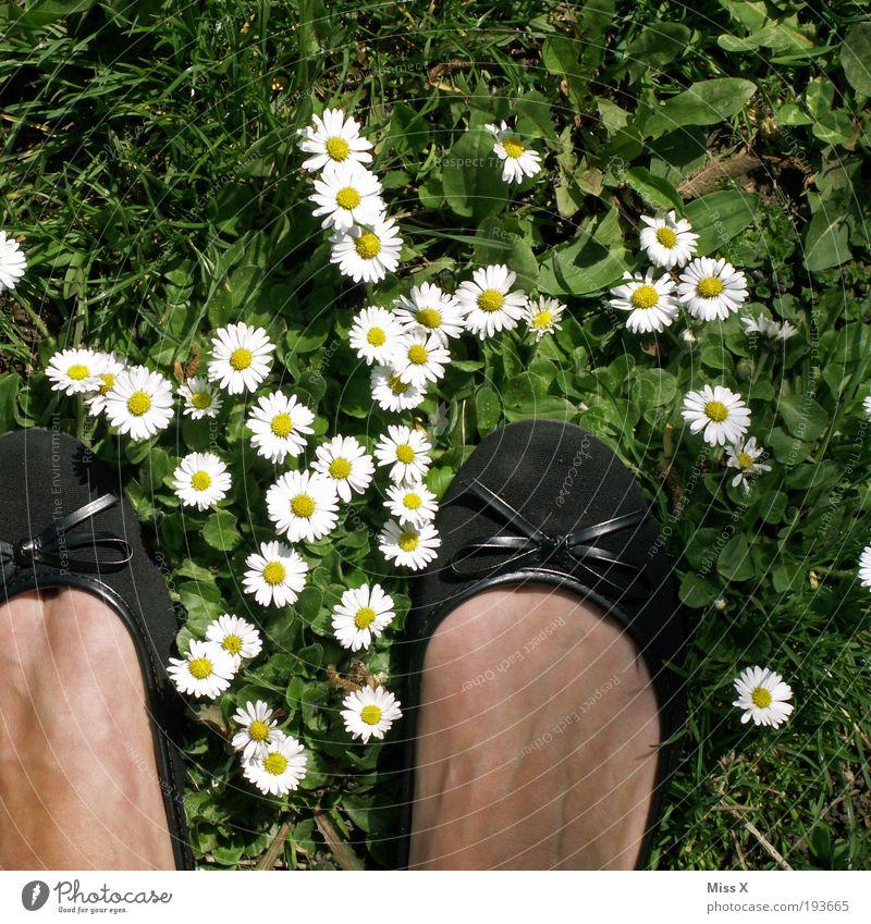Hallo Frühling, Sommer, Sonne, Gänseblümchen und Käsefüße Ferien & Urlaub & Reisen Garten Fuß 1 Mensch Natur Blume Gras Blatt Blüte Wiese Schuhe Fröhlichkeit