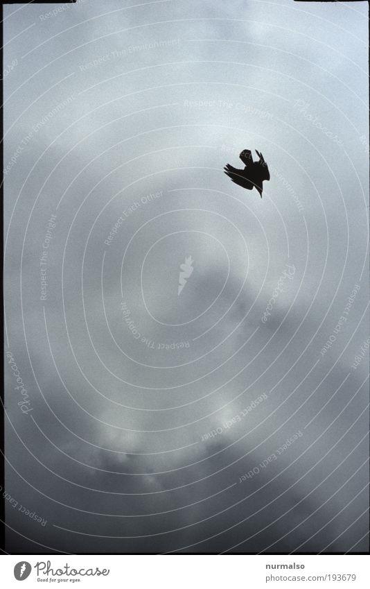 Sturzflug Natur Wolken Tier dunkel Landschaft Luft Vogel Angst Kunst Wind Wetter fliegen Horizont Lifestyle Luftverkehr trist