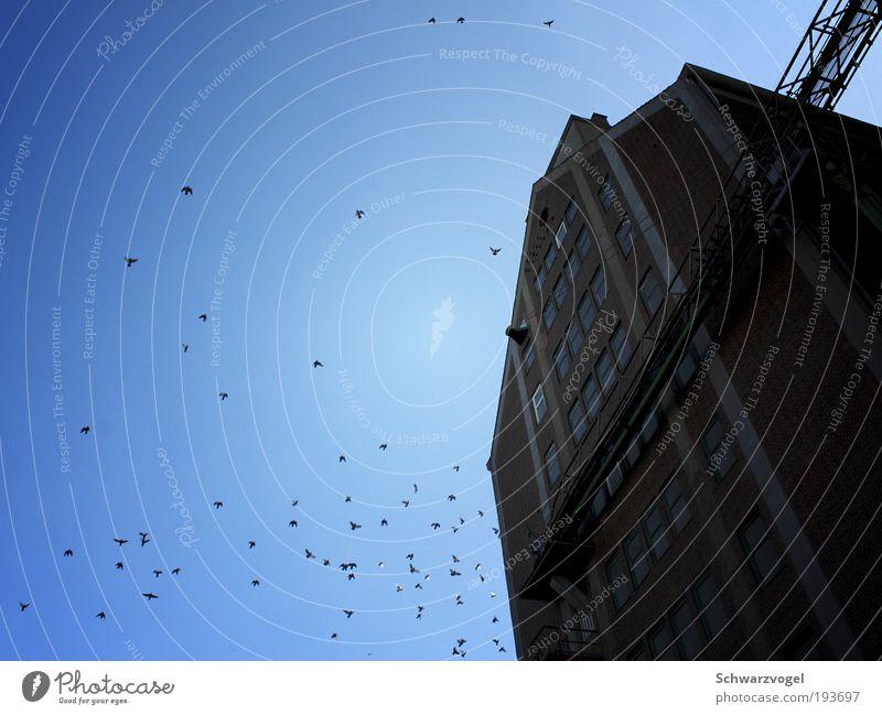 Sky blue sky Himmel blau kalt Freiheit oben Bewegung Glück Stein Gebäude Luft Stimmung Vogel Fassade fliegen hoch Beton