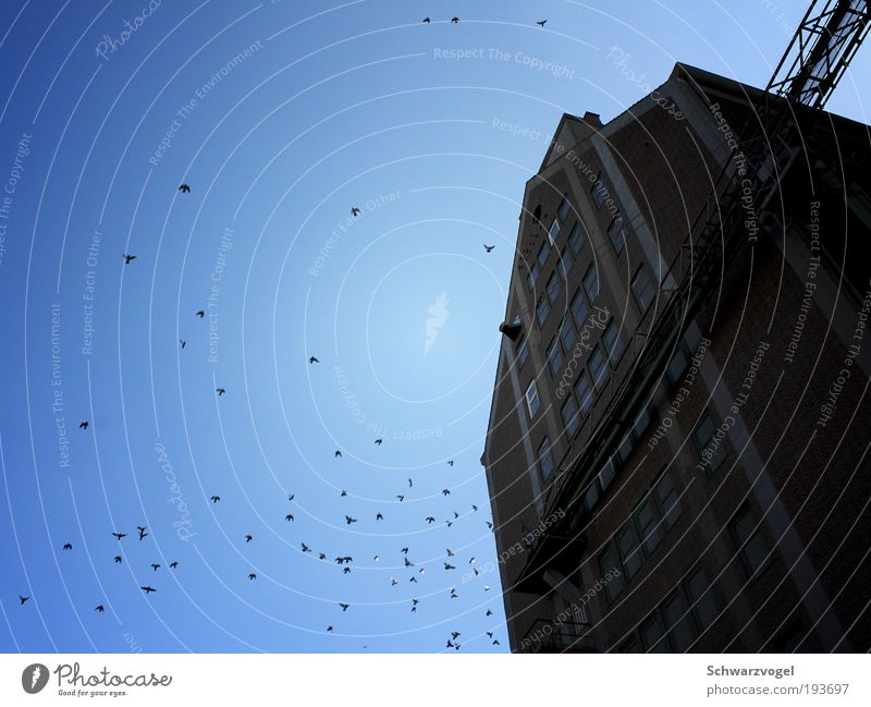 Sky blue sky Segeln Industrie Luft Himmel Industrieanlage Fabrik Bauwerk Gebäude Fassade Stein Beton atmen beobachten Bewegung fliegen Blick Glück groß