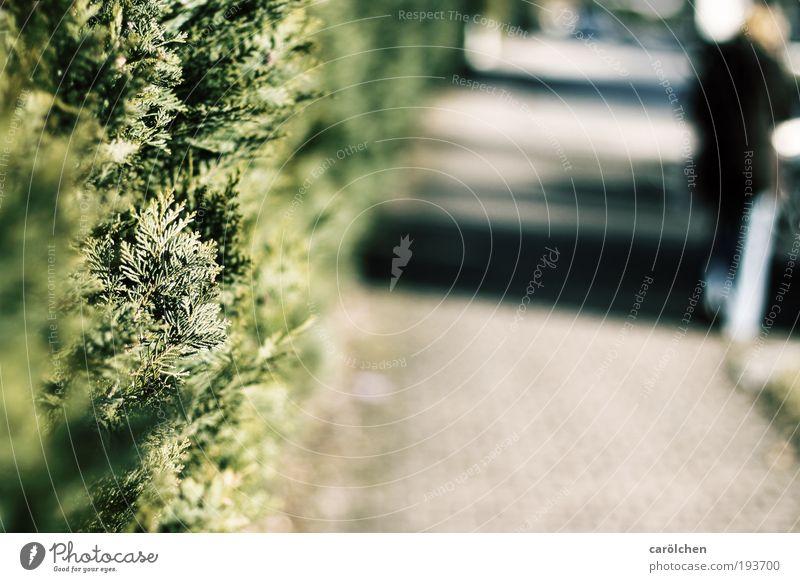 abseits Mensch 1 gehen dunkel trist blau grau grün schwarz carölchen Wege & Pfade einzeln Unschärfe Hecke Wegrand leer Isoliert (Position) Einsamkeit Am Rand