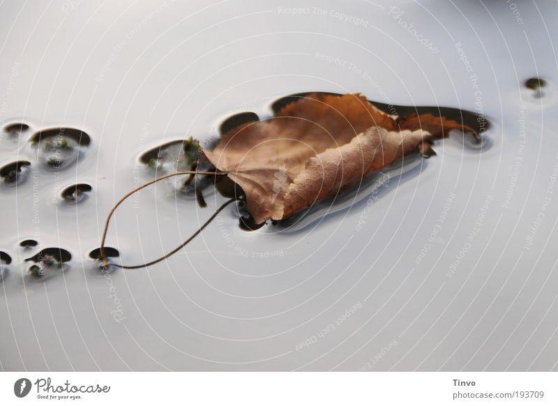 Ruhe trägt Natur Wasser Blatt ruhig Herbst See liegen Stengel Teich Im Wasser treiben Glätte Pfütze Herbstlaub flach Wasseroberfläche Blattadern