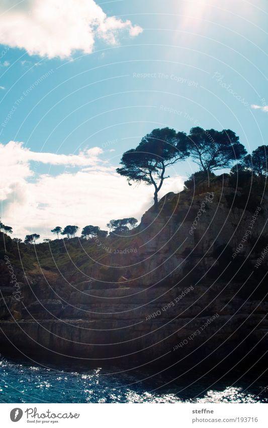 Spring! Landschaft Schönes Wetter Baum Küste Bucht Riff Meer Mittelmeer Mallorca Einsamkeit Erholung träumen Ferien & Urlaub & Reisen paradiesisch Farbfoto
