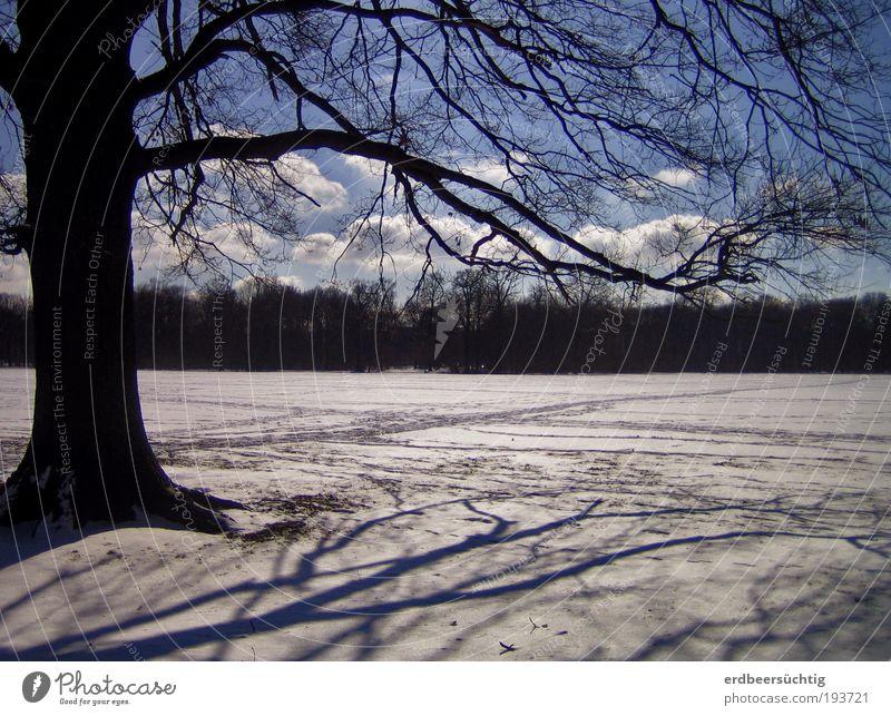 longing for summer Natur Himmel weiß Baum blau Winter Wolken Schnee Landschaft Wetter Ast Wunsch Sehnsucht Vorfreude Frühlingsgefühle Freude