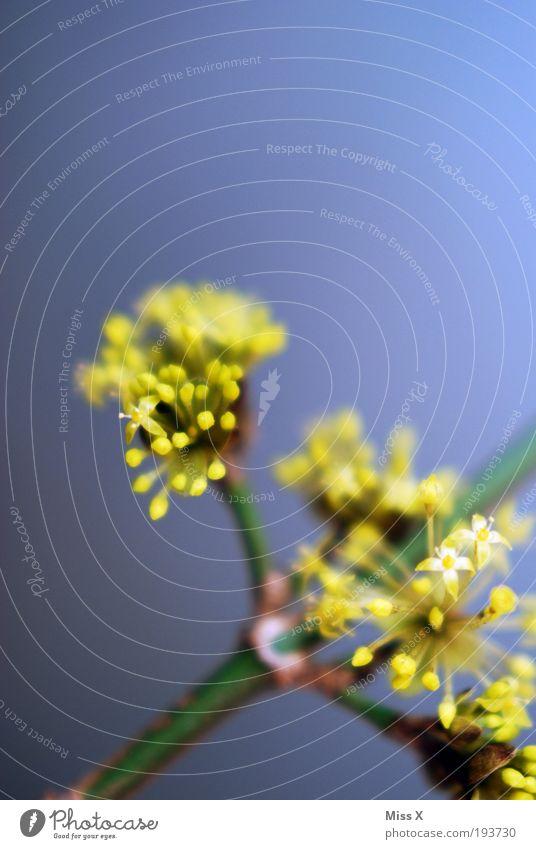 der Frühling ist da Dekoration & Verzierung Natur Sommer Schönes Wetter Pflanze Blume Blatt Blüte Park Blühend Wachstum schön positiv gelb Stimmung zart klein