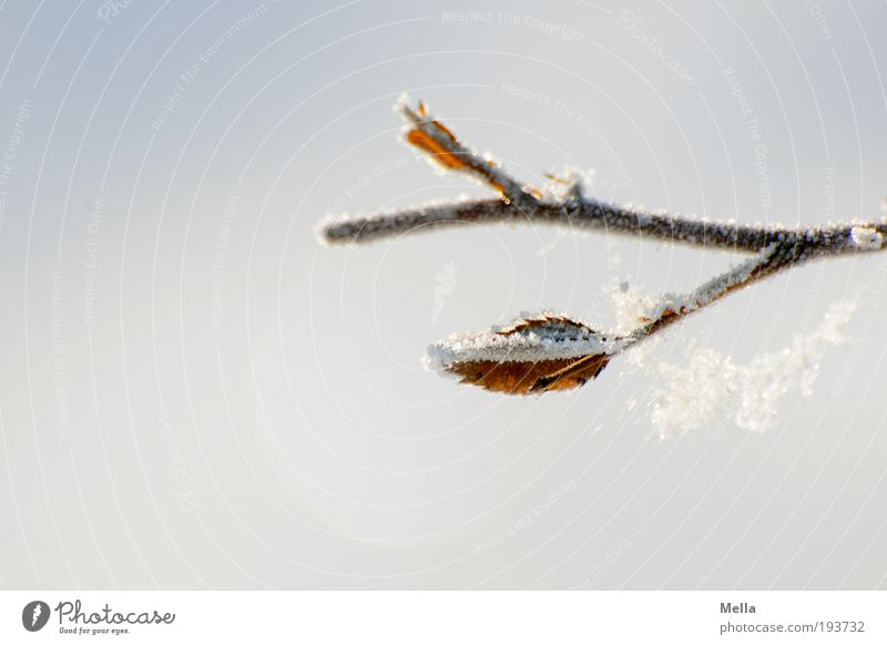 Winterdurchhänger Natur Pflanze Winter ruhig kalt Schnee Eis hell Umwelt Frost Netz Klima rein Ast natürlich frieren