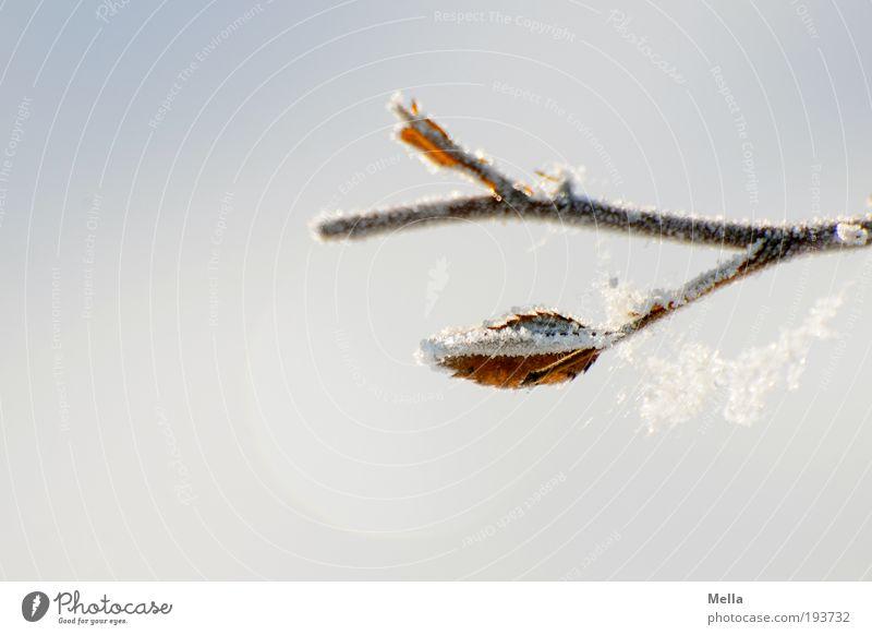 Winterdurchhänger Umwelt Natur Pflanze Klima Klimawandel Eis Frost Schnee Ast Spinnennetz Netz frieren hängen hell kalt natürlich rein ruhig Farbfoto