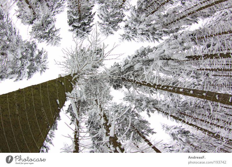 letzter Gruß vom Winter Schnee Winterurlaub Umwelt Natur Landschaft Pflanze Himmel Eis Frost Baum Wald kalt grau weiß Winterwald winterbild Januar Erzgebirge