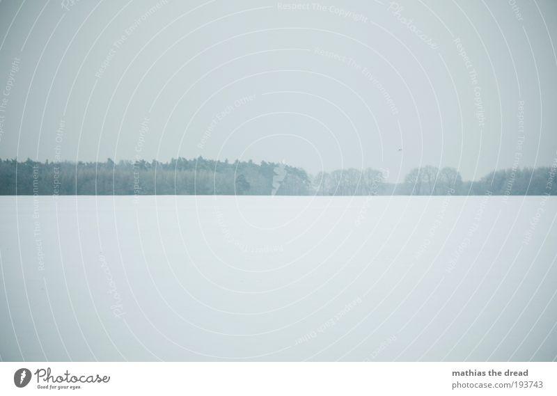 BLUE MORNING Umwelt Natur Landschaft Himmel Wolken Horizont Winter schlechtes Wetter Nebel Eis Frost Schnee Pflanze Baum Wiese Feld kalt Zufriedenheit
