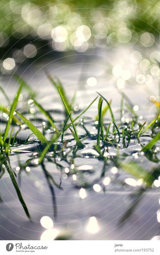 .Tagtraum. Natur Wasser grün Pflanze ruhig Wiese Gras Zufriedenheit glänzend Umwelt nass frisch Klima rein natürlich Idylle
