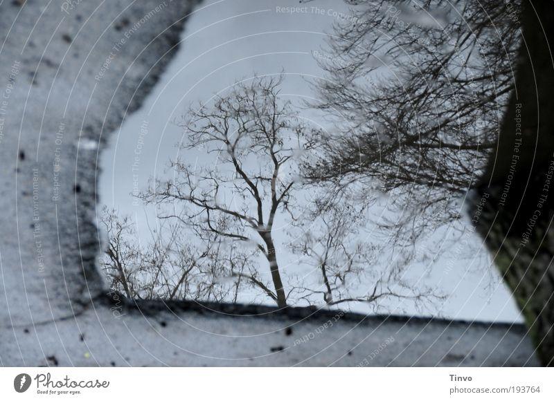 Hinterhofpfütze Umwelt Natur Wasser Herbst Winter Klima schlechtes Wetter Baum dunkel kalt Traurigkeit Vergänglichkeit Pfütze Asphalt Boden Zweige u. Äste