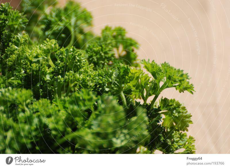 Kraut grün Sommer Sonne Frühling Gesundheit Ernährung Kreativität Gemüse Kräuter & Gewürze lecker Bioprodukte Vegetarische Ernährung Nutzpflanze