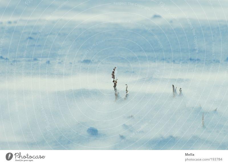 Kalte Schneesee Umwelt Natur Landschaft Erde Winter Klima Klimawandel Wetter Wind Sturm Eis Frost Wiese Feld kalt natürlich Schneewehe Schneedecke Schneesturm