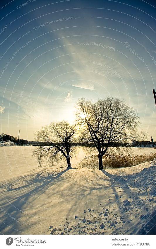 Himmel Natur blau weiß schön Ferien & Urlaub & Reisen Freude Winter Ferne Schnee Umwelt Landschaft Erde Park laufen