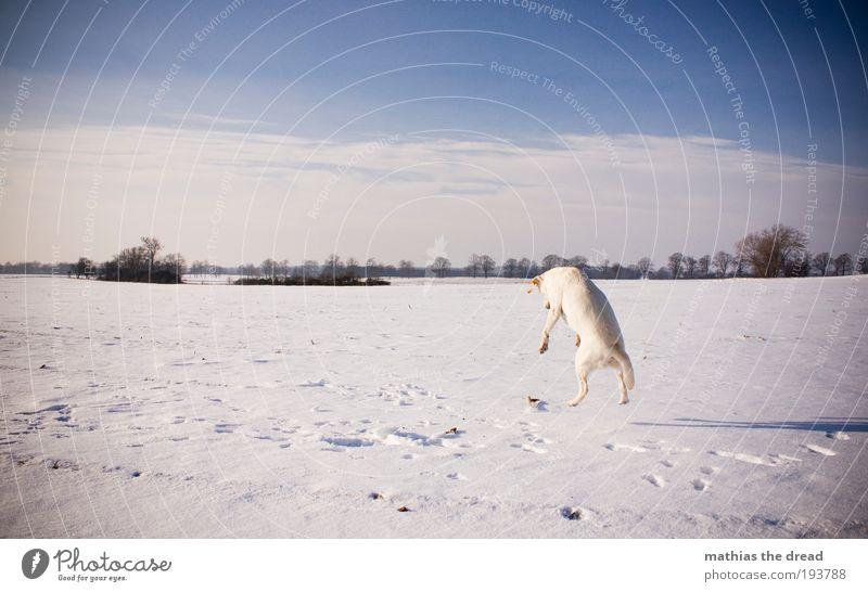 BOING BOING Natur Himmel Baum Sonne Pflanze Winter Wolken Tier kalt Schnee Wiese springen Spielen Bewegung Hund Landschaft