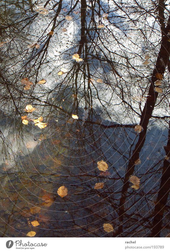 Trügerische Ruhe Wasser Wolken Herbst Winter Unwetter Sturm Baum Blatt laublos Geäst Wald Teich See Flüssigkeit nass durcheinander Wasserspiegelung faulig