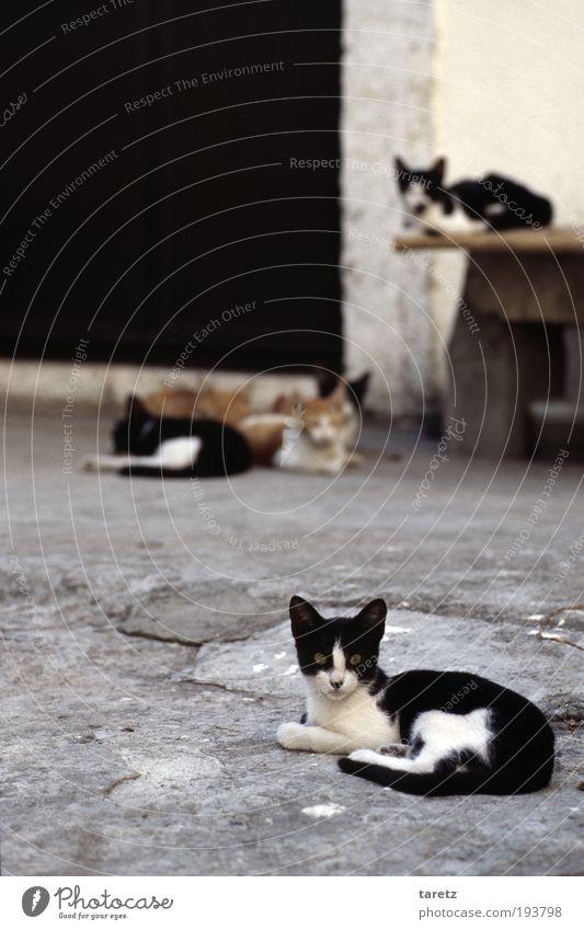 Gemischtes Doppel Katze Stadt rot schwarz grau klein schlafen Tiergruppe niedlich Wachsamkeit Haustier kuschlig Hinterhof Erwartung Tier Klischee