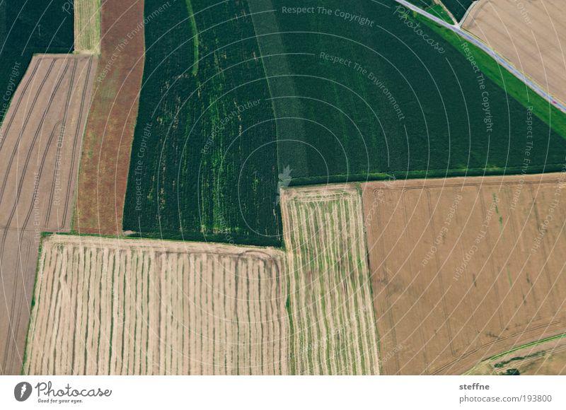 Spring-ins-Feld Wiese ästhetisch Flugzeugausblick Linie Ackerbau Landwirtschaft Farbfoto abstrakt Muster Strukturen & Formen Vogelperspektive
