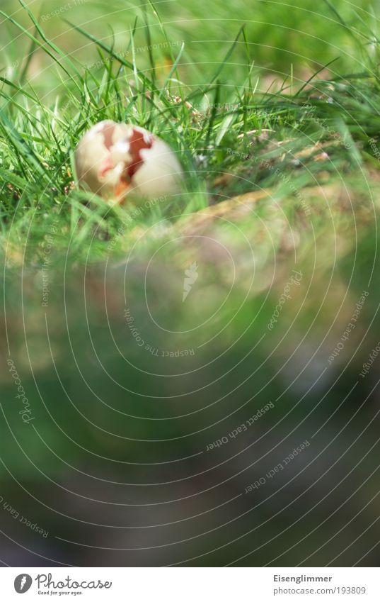 Tatort Ostereinest Natur grün Pflanze Wiese Gras Frühling Garten Park Angst gefährlich Ostern Ende bedrohlich Vergänglichkeit gruselig Gewalt