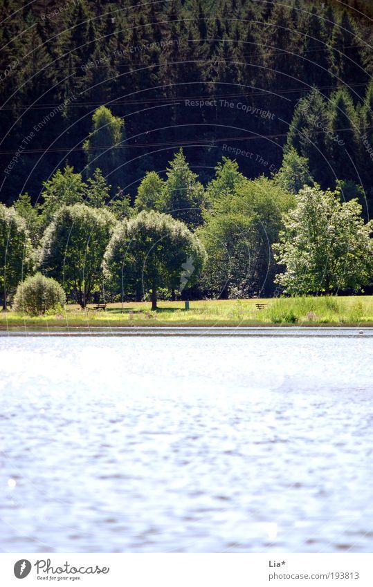 dort Sommer Umwelt Natur Landschaft Pflanze Tier Wasser Klima Klimawandel Park Wiese Wald Seeufer Flussufer Wahrheit authentisch Erholung Frieden ruhig