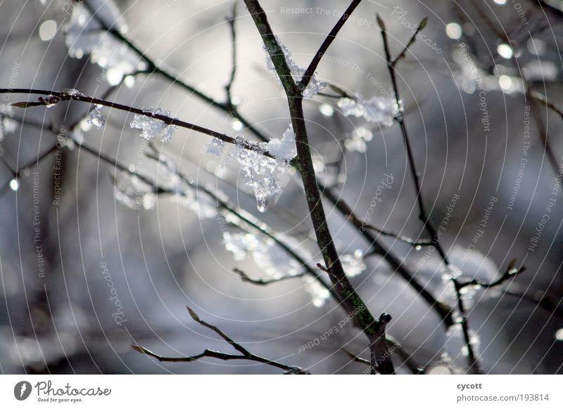 Eisiger Ast Natur Tier Winter Wetter Frost Baum frieren glänzend kalt Farbfoto Außenaufnahme Tag Schwache Tiefenschärfe Zentralperspektive