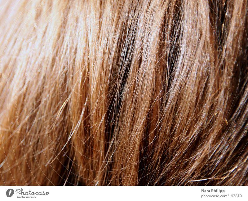 a hairy sunny day Mensch schön rot Haare & Frisuren Stimmung braun ästhetisch Romantik rothaarig Sinnesorgane schimmern Reflexion & Spiegelung