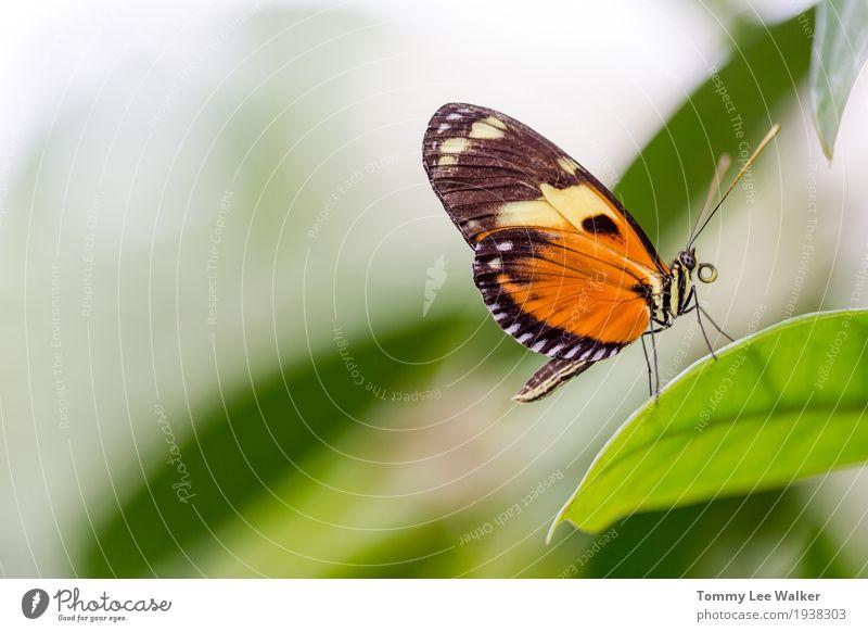 Allgemeines Tigerschmetterlings-Profilporträt Natur Farbe grün schön Blume rot Umwelt gelb Liebe natürlich Garten Freiheit Erde fliegen Kindheit Fröhlichkeit