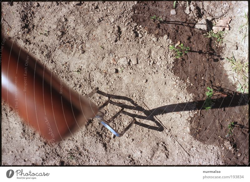 Gartenvorfreude Natur Pflanze Freude Umwelt Freiheit Holz Garten Erde Zufriedenheit Feld Freizeit & Hobby Beginn frisch authentisch Häusliches Leben gut