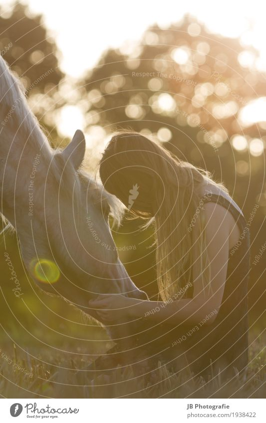 Mit Dir in den Sonnenuntergang Reiten feminin Junge Frau Jugendliche Körper Haare & Frisuren 18-30 Jahre Erwachsene Natur Landschaft Sommer Wiese Feld Kleid