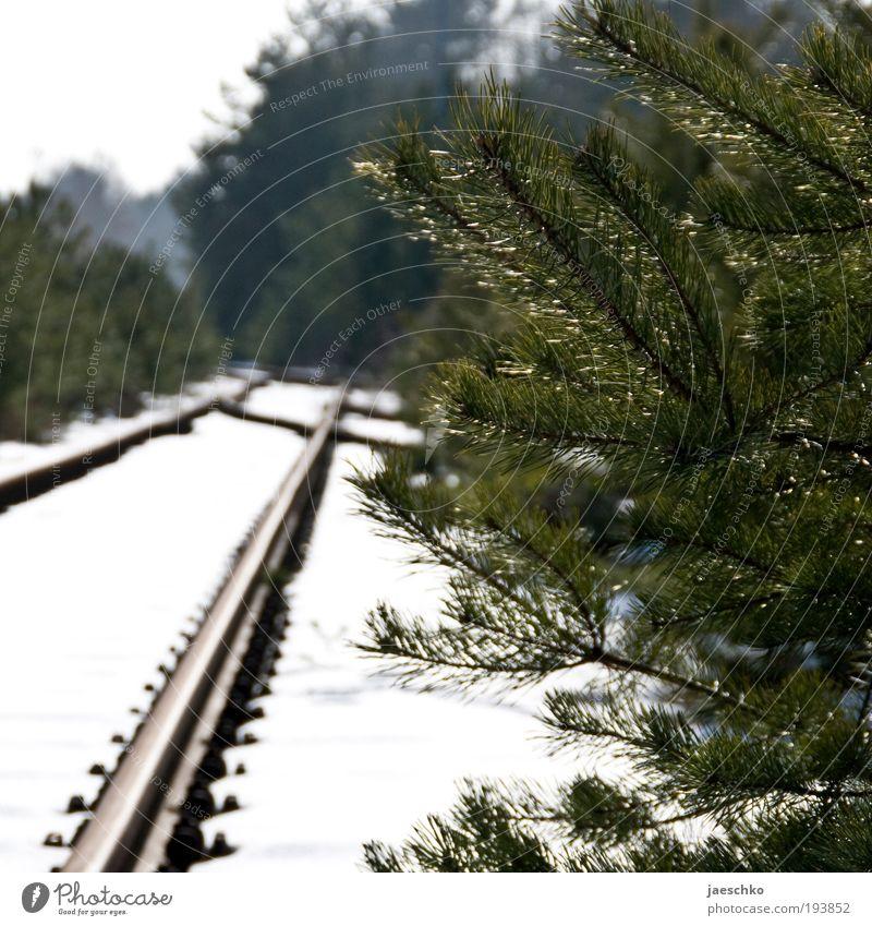 Nächster Halt: Wald. Natur Baum Winter ruhig Wald Schnee Umwelt Wege & Pfade Eisenbahn Klima Perspektive Zukunft Sträucher Hoffnung rein Neugier