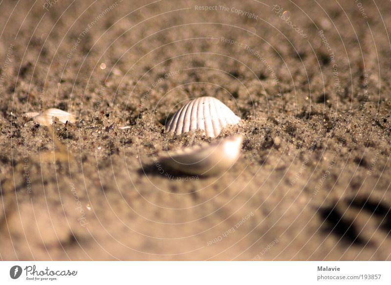 Allein im Sand Natur Wasser weiß Strand ruhig Erholung Gefühle träumen Stimmung braun Zufriedenheit Freizeit & Hobby nass natürlich Sehnsucht