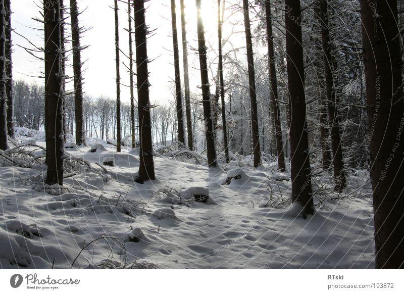 Winterschatten Baum Winter Wald Leben Schnee Erholung Stil Stimmung Deutschland Europa Kultur