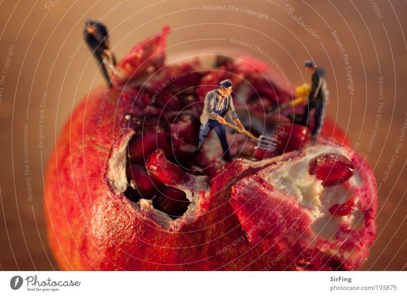 Erntehelfer Mensch Mann rot Arbeit & Erwerbstätigkeit Feld Erwachsene klein Lebensmittel Umwelt Frucht Baustelle Beruf Apfel außergewöhnlich Werkzeug exotisch