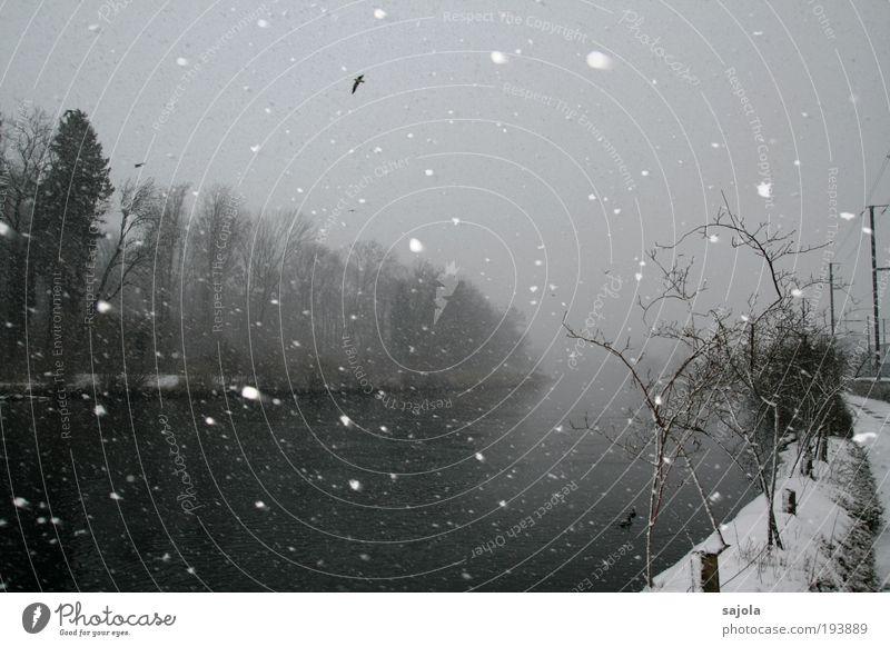 am fluss Umwelt Natur Landschaft Pflanze Tier Urelemente Wasser Himmel schlechtes Wetter Schnee Schneefall Baum Sträucher Flussufer Vogel fliegen grau Schweiz