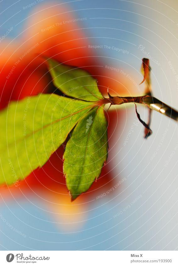 Sonnenschein schön Pflanze Sommer Blatt Wiese Blüte Frühling Park frisch Rose ästhetisch Wachstum Romantik Blühend Duft Blumenstrauß