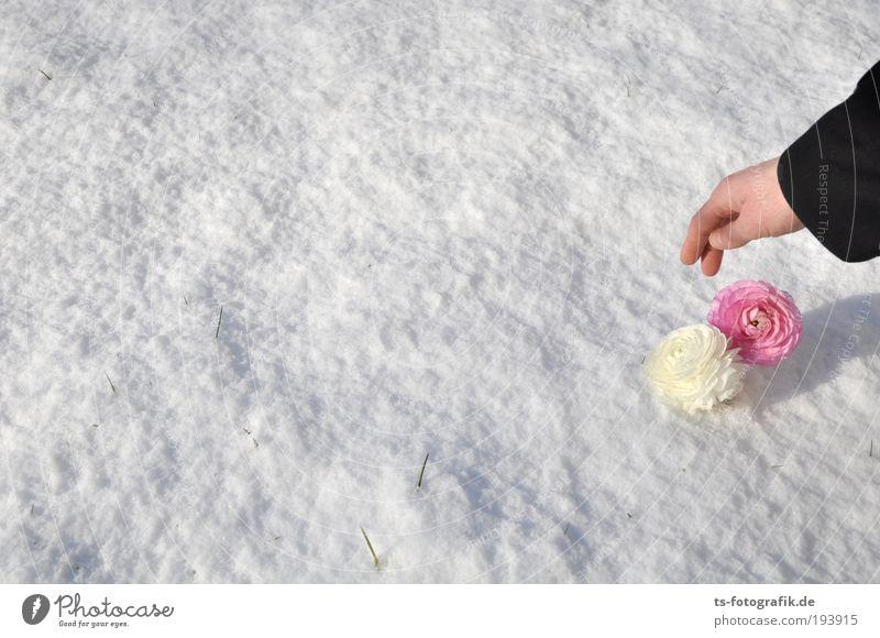 Schneeweißchen und Rosarot Mensch Hand schön Blume Winter Leben kalt Frühling Garten Blüte Eis rosa Arme paarweise