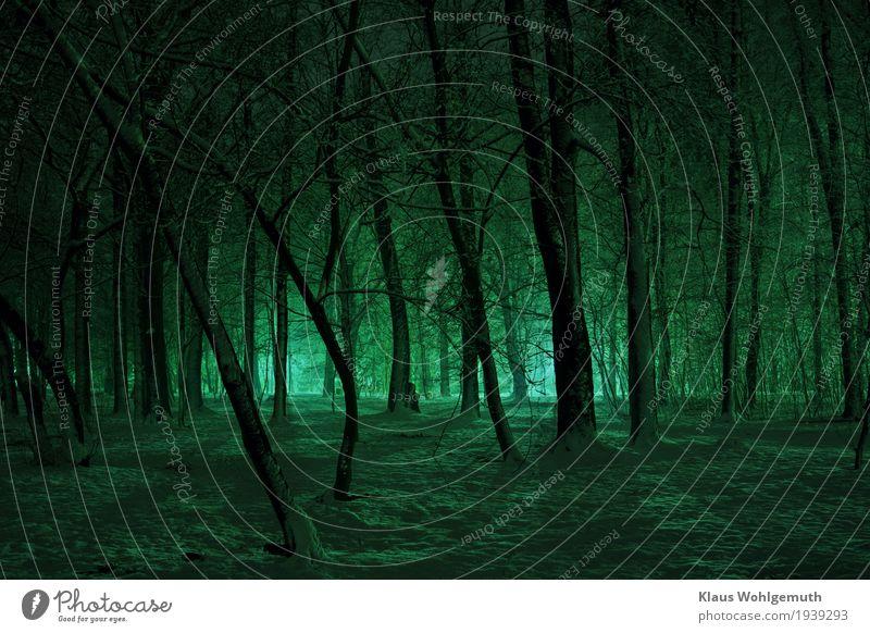 Abend im Park, nach Schneefall Natur Winter Baum Wald Salow frieren leuchten gruselig kalt blau schwarz Romantik Einsamkeit unheimlich bedrohlich Angst Farbfoto