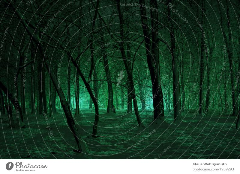 Lange Schatten Natur Winter Schnee Baum Park Wald Salow frieren leuchten gruselig kalt blau schwarz Romantik Einsamkeit unheimlich bedrohlich Angst Farbfoto