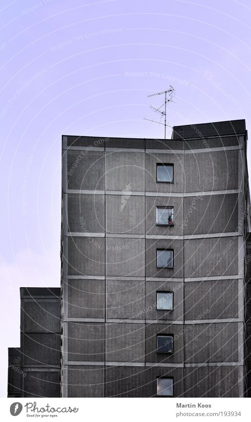 blumentopfgewinner alt Pflanze Einsamkeit kalt Fenster Wand Mauer Architektur Fassade Häusliches Leben trist Lifestyle Hochhaus Dekoration & Verzierung Armut