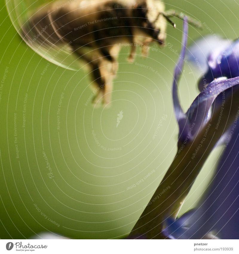 Frühling im Anflug Natur Blume blau Pflanze Sommer Blatt Tier Wiese Blüte Park Luft klein Umwelt fliegen Klima
