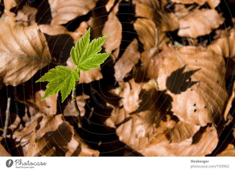 grünes Wachstum Natur grün Baum Pflanze Blatt ruhig Umwelt Herbst Frühling Holz braun Energie Erfolg Wachstum neu Wandel & Veränderung