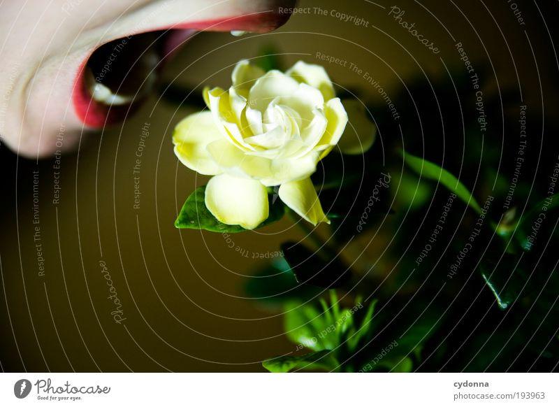Schmeckt gut Mensch Frau Jugendliche schön Pflanze Blume Erwachsene Leben Freiheit Stil träumen Essen Gesundheit elegant Mund Lifestyle