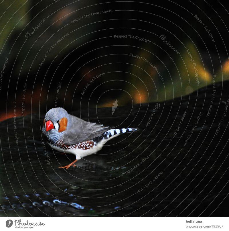 Fink Flink Natur Tier Vogel Umwelt Geschwindigkeit Feder Flügel Zoo Wildtier Flussufer