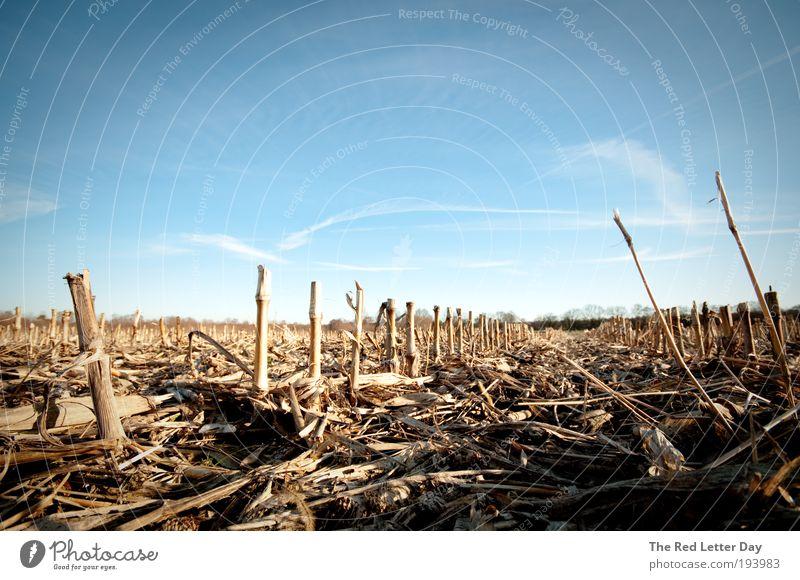 This will be the death of us. Natur Landschaft Feld Umwelt Erde Ernte Weizen Landwirtschaft Weizenfeld