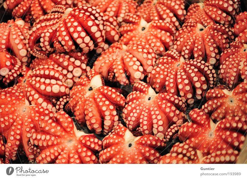 Das gemeine Weichtier rot schwarz Tod Lebensmittel Arme rosa Gastronomie Japan Asien 8 Präsentation Tier Fisch Licht Meeresfrüchte Ernährung