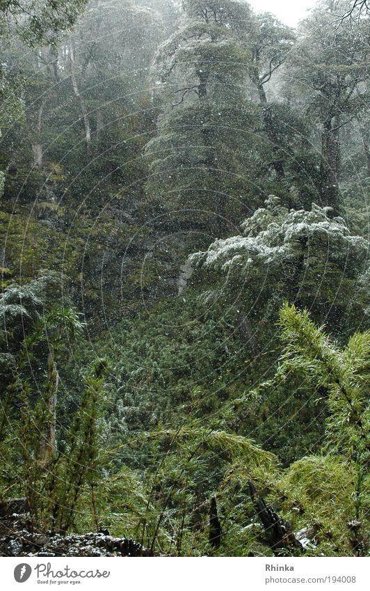 Waldzauber Natur schön grün Winter ruhig Schnee Hoffnung Urwald Märchenwald