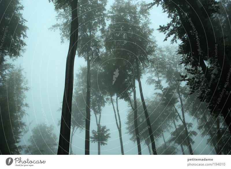 Nebelwald Natur Baum Pflanze Wald Umwelt Landschaft kalt Wetter bedrohlich Baumstamm Märchen unheimlich Laubbaum Verhext Märchenwald